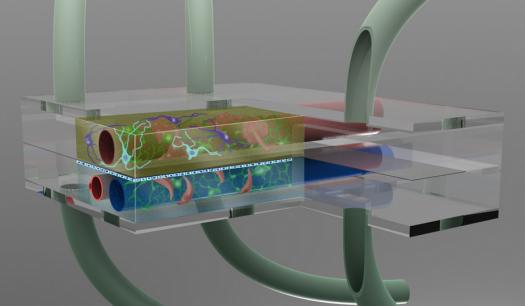 """美国科学家拟将""""器官芯片""""组合制成人体模拟器"""