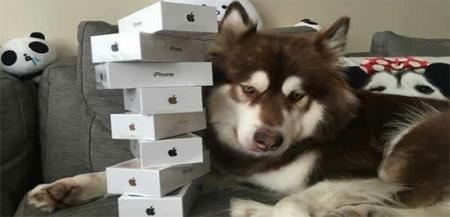 如果你捡到了王思聪的狗,怎么做才能把利益最大化?