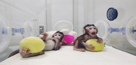 世界难题重大突破!世界首例体细胞克隆猴中国诞生