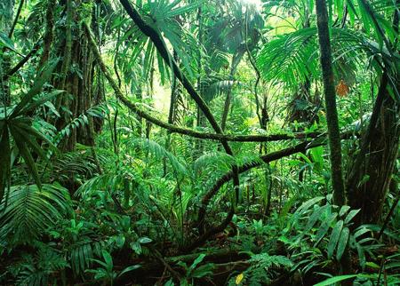 不要迷失在物联网数据丛林中