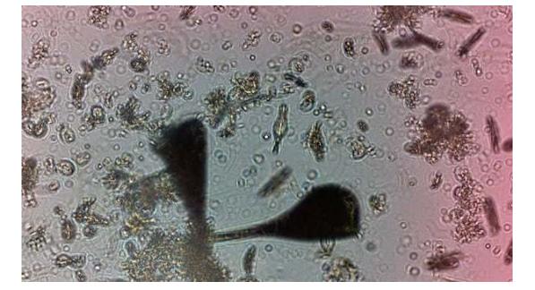 IBM发布人工智能显微镜,可检测海洋水资源
