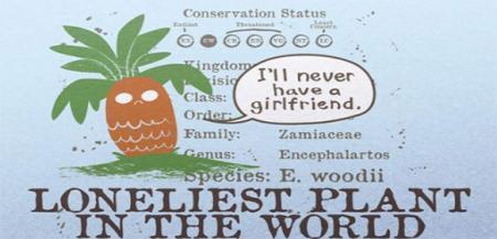 看,它多像你:一棵永远找不到女朋友的树
