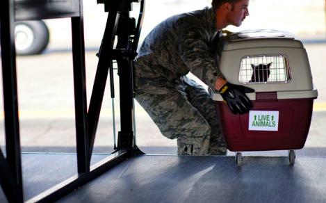物联网宠物解决方案 跟踪宠物在航空运输中的安全和舒适度
