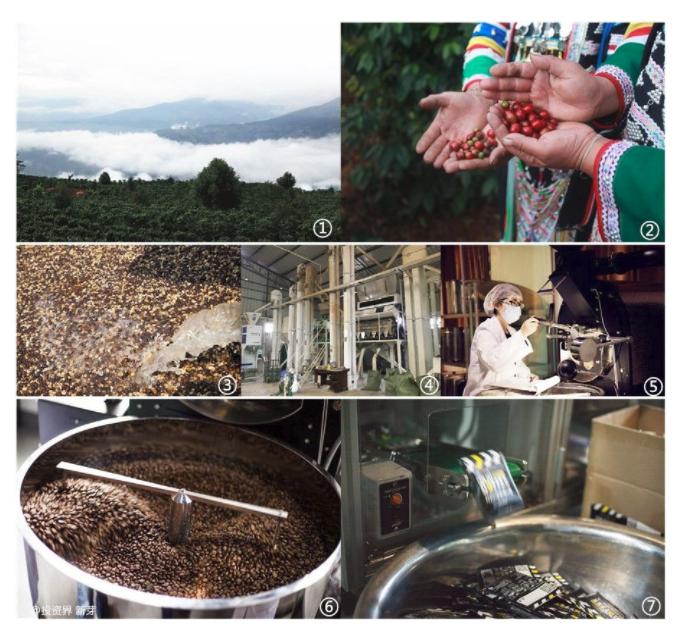 3年布局咖啡全产业链,他要在茶乡普洱实现国产咖啡逆袭