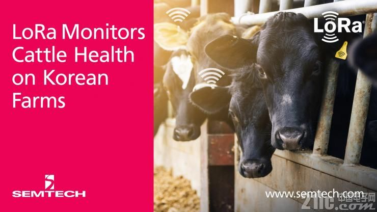 Semtech:SK Telecom采用其LoRa技术监测牲畜健康情况