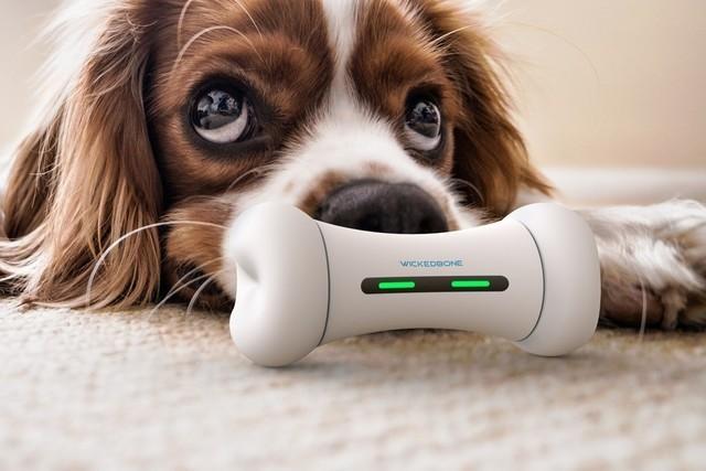 狗狗也有福利,Wickerbone智能骨头,颠覆你的想象