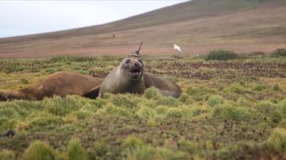 在海豹身上安装传感器?