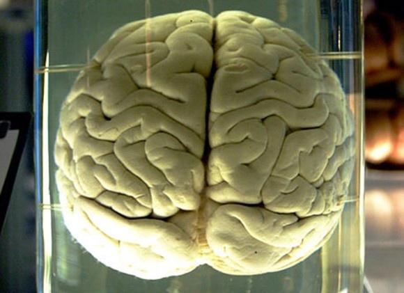 """未来移动终端将""""人脑""""化 高通首款NPUs有望明年亮相"""