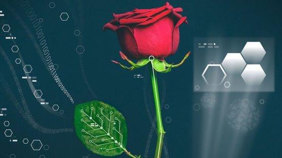 这个脑洞开大了!半机械植物诞生 玫瑰发电厂指日可待