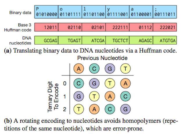 微软黑科技逆天:当DNA可以存储数据...