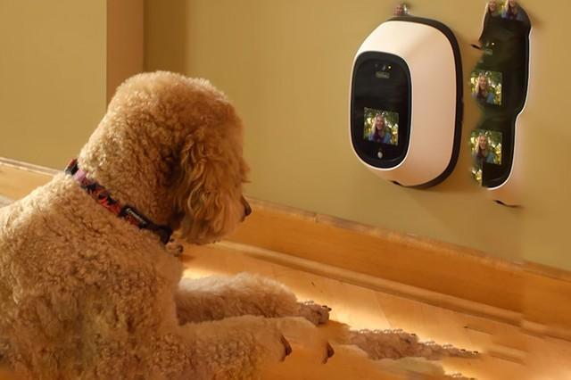 汪星人福利:铲屎官装备之宠物摄像头PetChatz