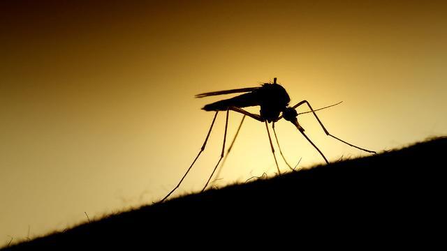 """""""昆虫不育术"""":谷歌欲用人工智能技术消灭蚊子"""