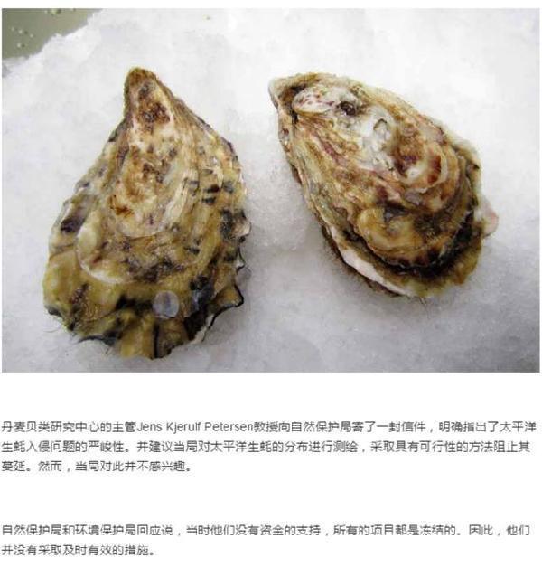 刘强东亲自指挥 京东生鲜正在评估引进丹麦生蚝