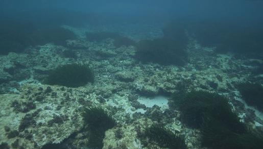 海底发现稀有金属碲:绿色能源创造和开采破坏之间该如何权衡