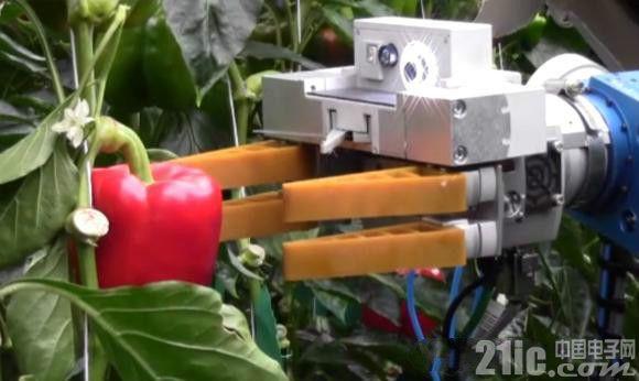 老外农场的帮手,机器人摘苹果一小时一万个!