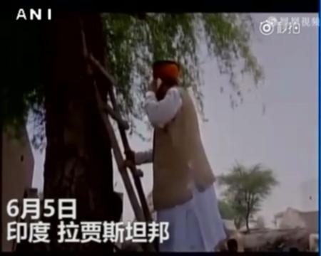 别再抱怨运营商不给力啦!印度部长爬树找信号打电话