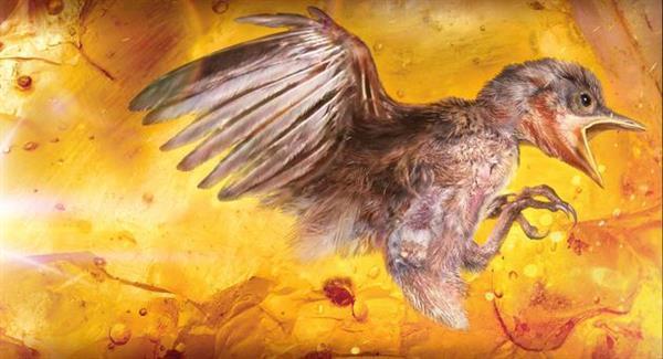 全球首见!琥珀中首次发现雏鸟化石 金黄鸟足醒目