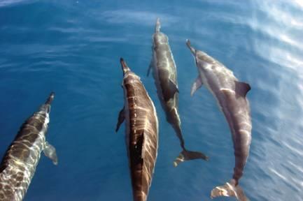 想知道海洋里的生物是怎么睡觉的吗?来看看吧