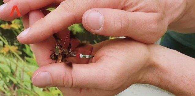 世界上最小无人机诞生,和蜻蜓一起飞翔!