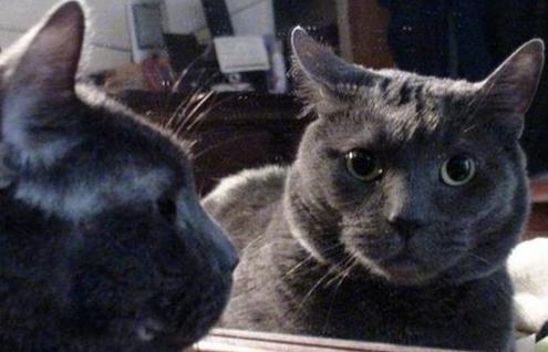 镜子其实一直在对我们撒谎