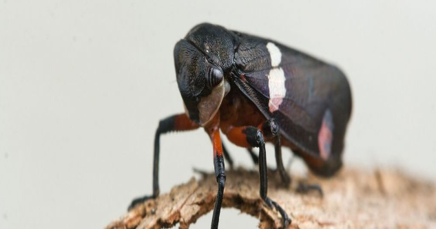 """哈利波特的""""隐身斗篷""""或成真?这种昆虫的微粒子或成为""""钥匙"""""""