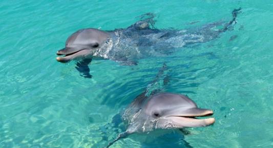 科学家证实:最早拥有自我意识的物种竟然是海豚!