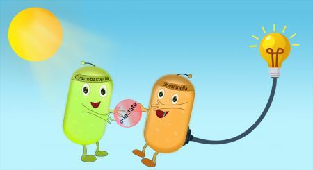 中科院微生物所创出新一代生物光伏系统